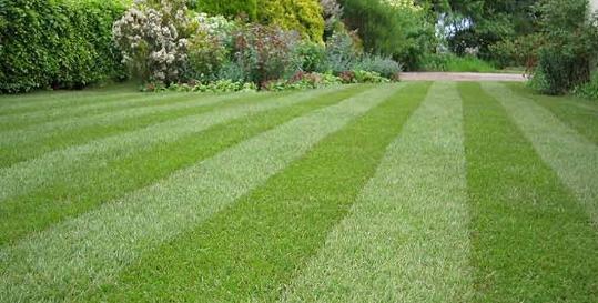 Leach's Lawnmowers Genius App Fading Image 3